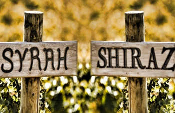 blog_syrah